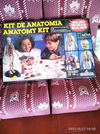 Kit de anatomia, para jovens