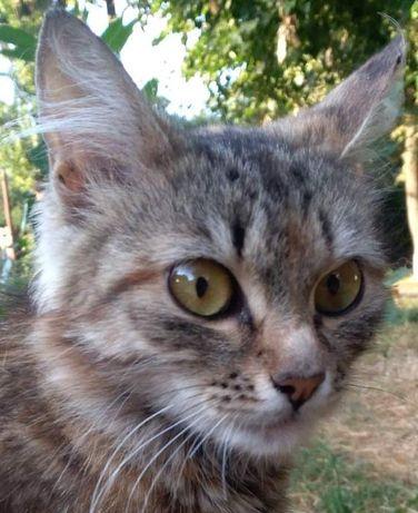 Стерилизованная кошечка Муся,10 месяцев,ищет добрых хозяев!
