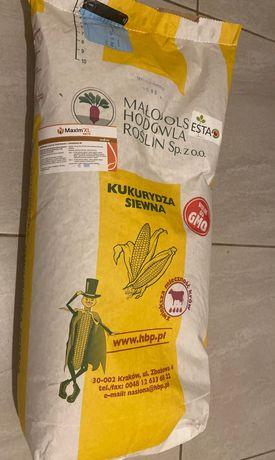 Kukurydza siewna Podlasiak