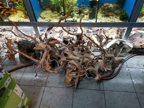 Korzeń driftwood
