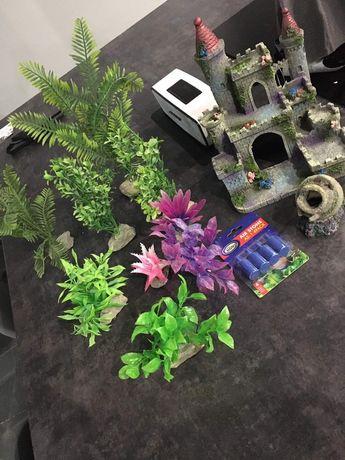 Roslinki, rośliny akwarium