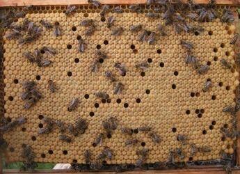 Пчелопакеты 2021