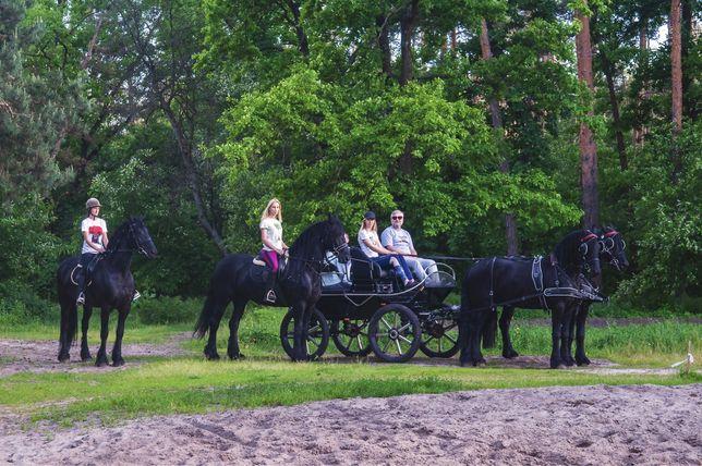 Фризские лошади большой выбор в Киеве конь кобыла жеребец