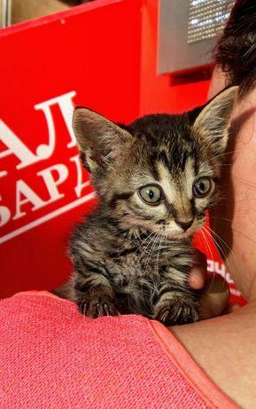 Подарю котенка.девочку 1 месяц и 3 недели