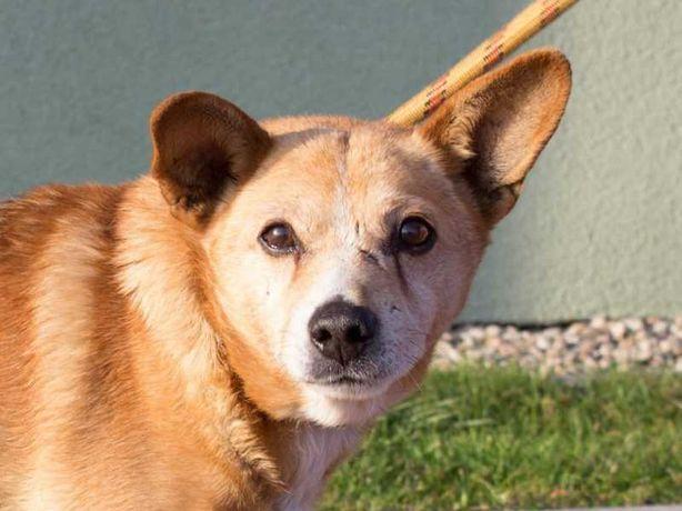 Felek - mały staruszek, który może zamieszkać z innymi psami