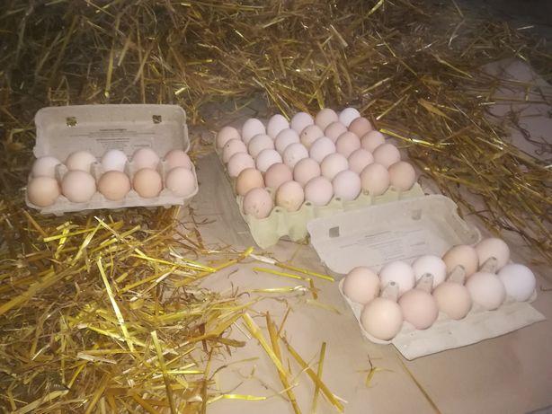 Wiejskie jajka z dowozem GRATIS . Trójmiasto i okolice
