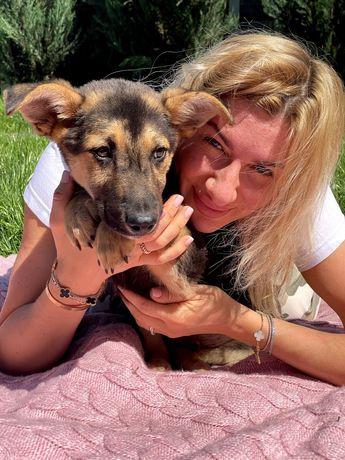 Щенок Поль, 3 месяца. Собака, пёс, щеня, собачка песик