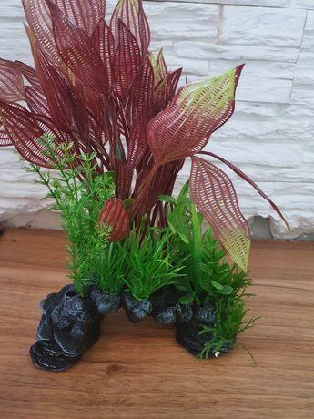 Sprzedam roślinki do terrarium akwarium