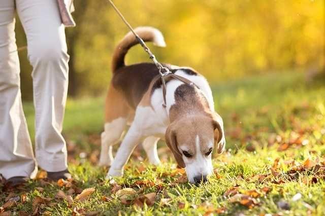 Dog Walking/Passeador/Cuidador de cães