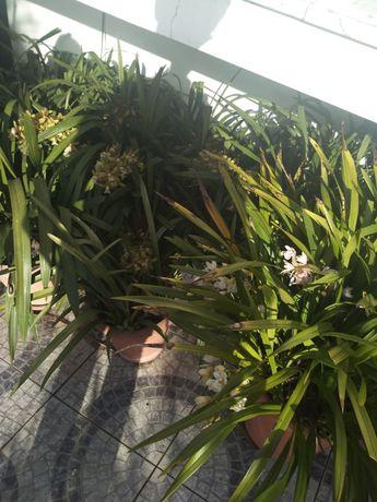 Orquídeas verde, branco, amarela