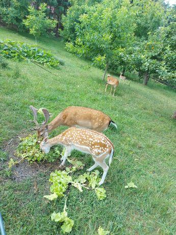 Sesję zdjęciowe rodzinne żywe zwierzęta