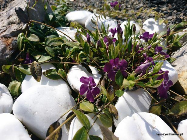 Śnieżnobiałe otoczaki thassos małe, średnie i duże