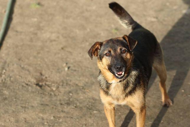 Kostek, młody radosny psiak do adopcji od zaraz!