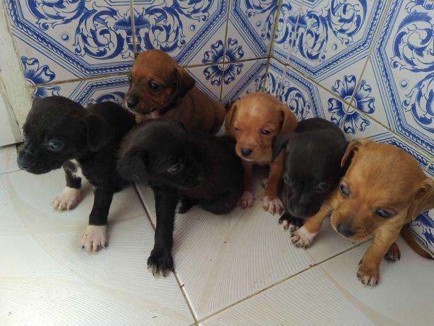 Adoção de cães de porte pequeno