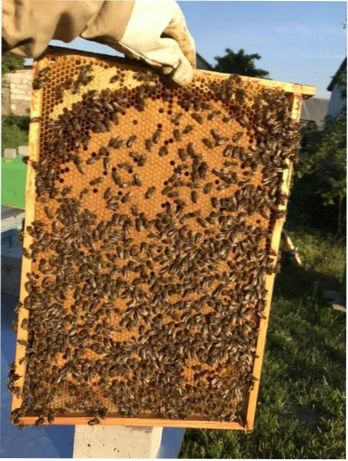 Цена снижена! Пчелопакет CarnicaС доставкой в Новомиргород!