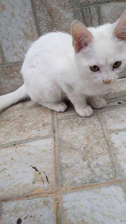 Ищем хозяев для котят Одесса, Одесская область.