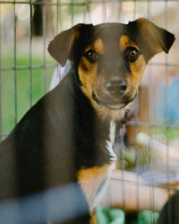 Стерилізована молода собачка в пошуках родини