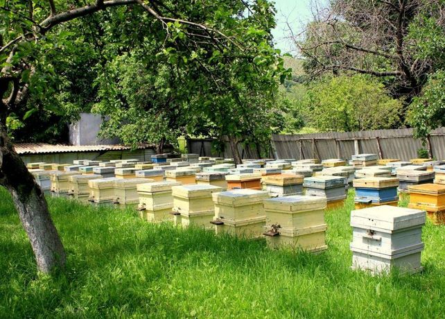 Пчелопакет Степова-ус С доставкой в Кропивницкий! Акция!