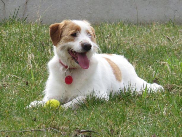 Owen - cudowny terier