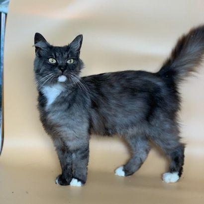 Красавица Жустин ищет любящих хозяев котенок котята кошеня кот