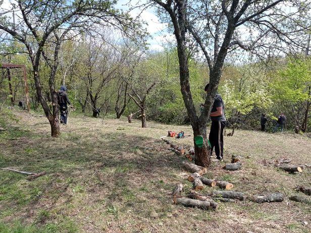 УБОРКА территории, чистка участка, спил деревьев, обрезка сада.