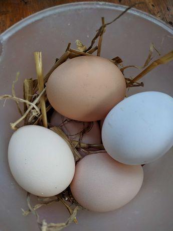 Sprzedam jajka  kur z wolnego wybiegu