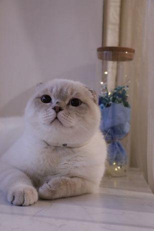 вязка -  кот развязан есть потомство