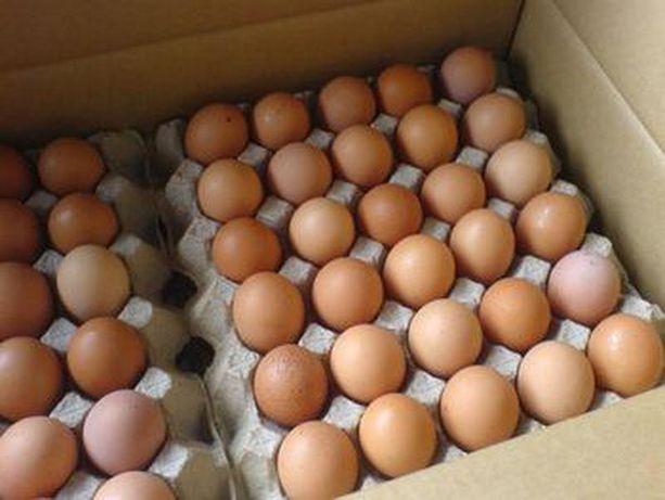 Гріз Сендрі інкубаційне яйце