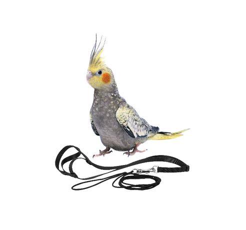 Szelki / Smycz dla papug XS,S,M,L dla każdej papugi