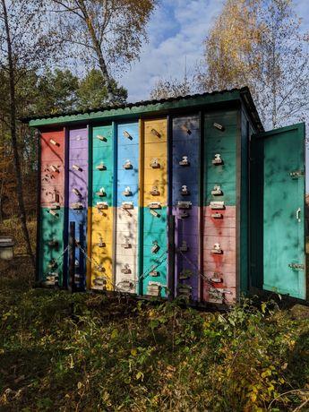 Продам бджолопавільйон