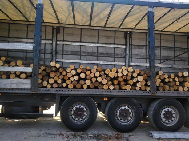 Słupki dębowe Kołki drewniane Ogrodzeniowe 250 -300 cm