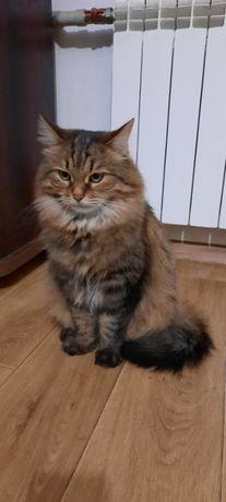 Шикарные котята и взрослые кошачьи в добрые руки