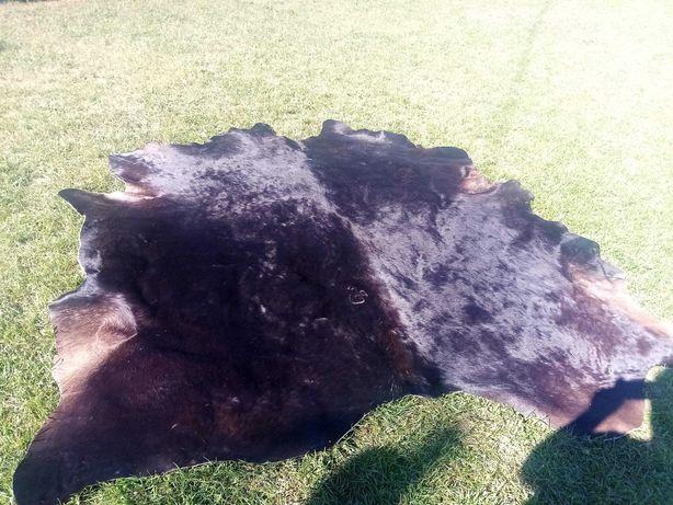 Dywan skóra bycza