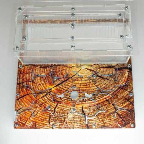 Формикарий + муравьи Messor aciculatus многоматочные жнецы (комплект)