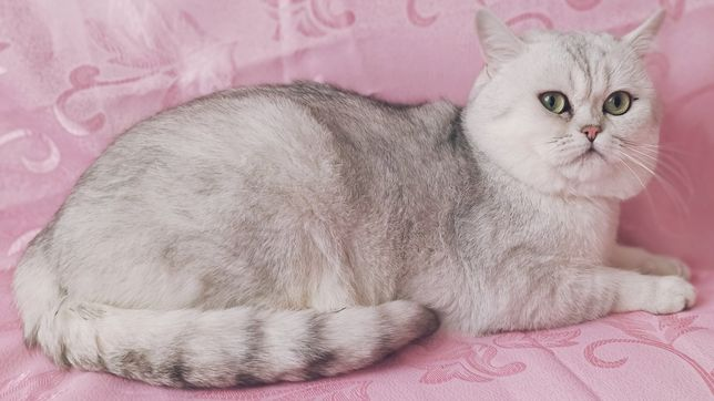 #кот для кошечек