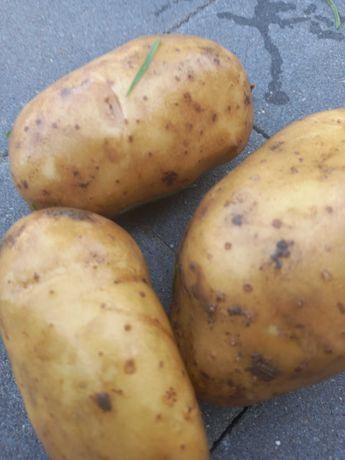 Ziemniaki jadalne bez nawozów