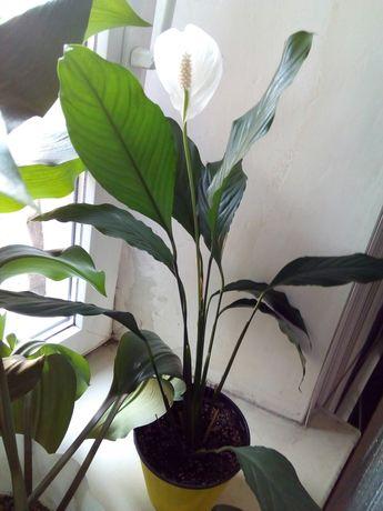 Комнатные и офисные растения