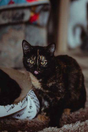 Mlodziutka 7 miesieczna kotka Rajka szuka domu