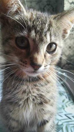Oddam kotka za darmo w dobre ręce