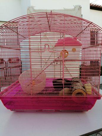 Gaiola Hamsters - rato