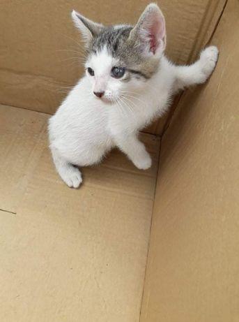 Dois gatinhos para adoção responsável
