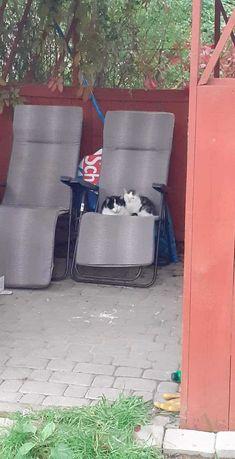 Oddam kotke z dzieciaczkami gdyz jest coraz zimniej a sama mam juz dwa