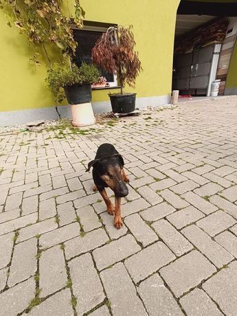 Angarka szuka domu z dobrze ogrodzoną posesją!