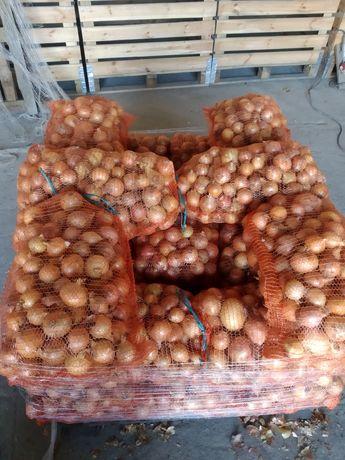 Sprzedam cebule letnia Gruba i drobna na szczypior
