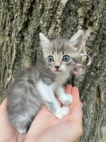 Котенок девочка 1,5месяца