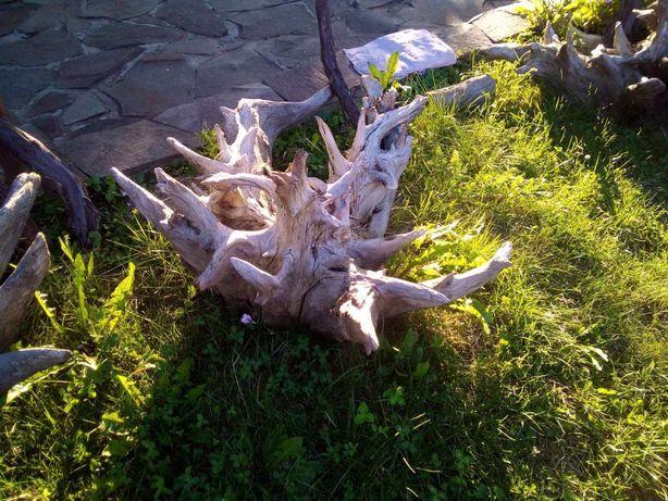 Коріння дерева для декору
