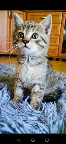 Oddam kotka samca, zaszczepiony, odrobaczony