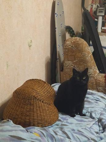 Плетеная корзинка для котика