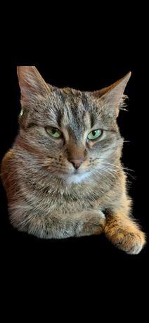 Roczna wysterylizowanazielonooka kotka  Amber szuka kochającego domku.