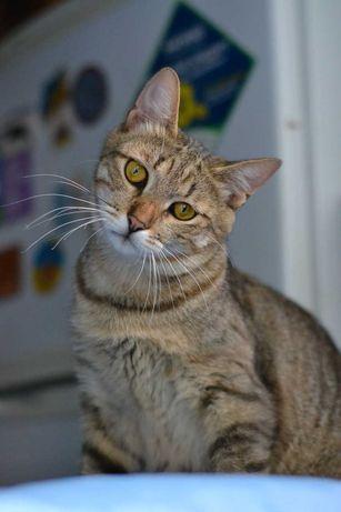 молоденький полосатий котичок бешкетник 1р